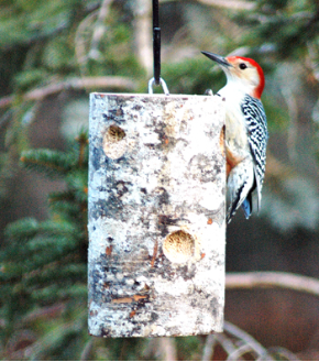 Oregon Suet Feeder