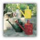 Classic Watering Cans
