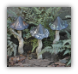 Tipsy Toadstools (cs/6) - Black with Spots