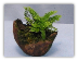 Micro Mini Fluffy Ruffles Fern