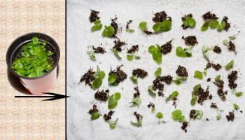 Косы на средние волосы в домашних условиях своими руками фото 67