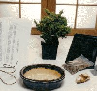 Starter Kit - Make Your Own Bonsai