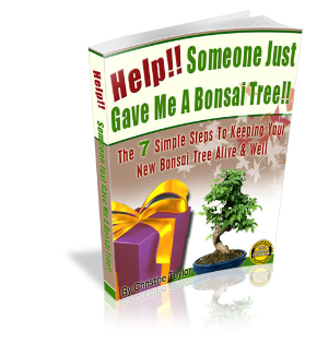 Help!! Someone Just Gave Me A Bonsai Tree!!