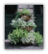 Three Tiered Planter - Euro Classic