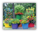Colorful Trug, Garden Plant Pails