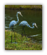 Steel Herons - Pair